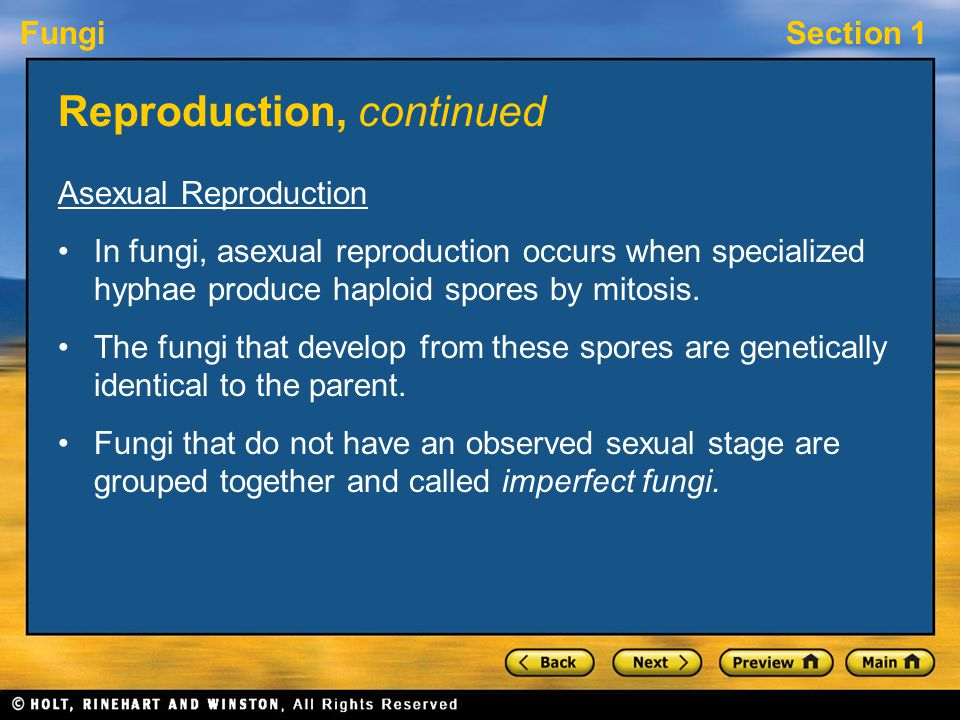 FungiSection 1 Reproduction, continued Asexual Reproduction In fungi, asexual reproduction occurs when specialized hyphae produce haploid spores by mi