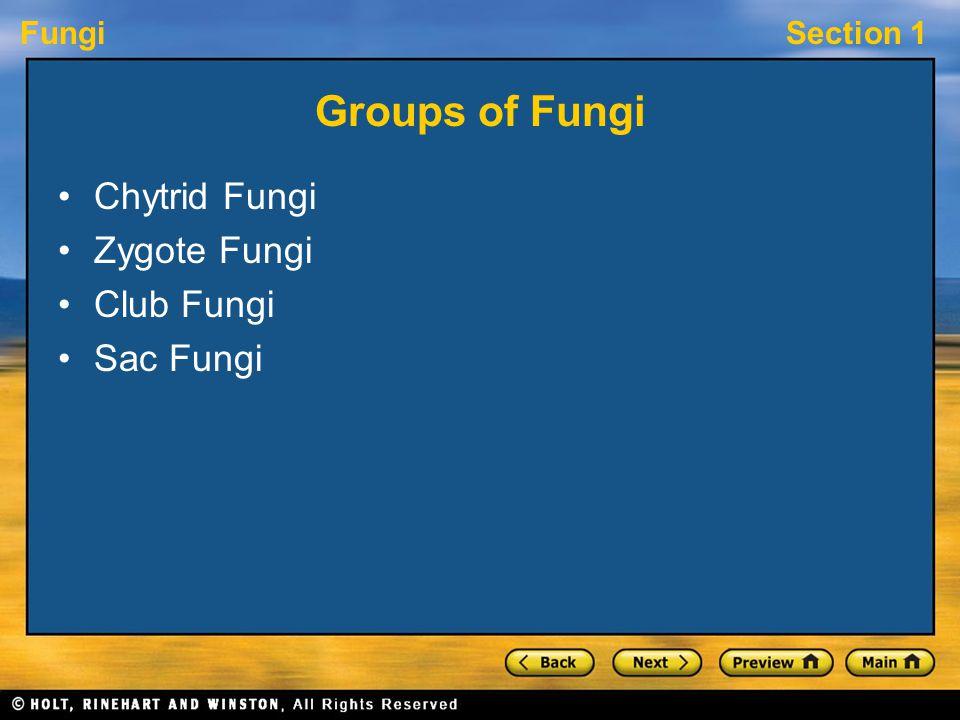 FungiSection 1 Groups of Fungi Chytrid Fungi Zygote Fungi Club Fungi Sac Fungi