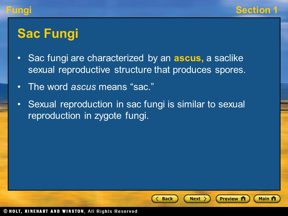 """FungiSection 1 Sac Fungi Sac fungi are characterized by an ascus, a saclike sexual reproductive structure that produces spores. The word ascus means """""""