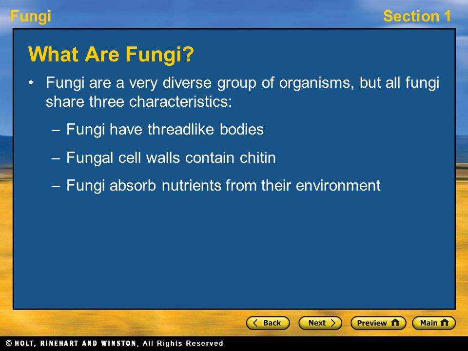 FungiSection 1 Fungal Partnerships, continued A mycorrhiza is an association between fungi and the roots of nearly all plants.