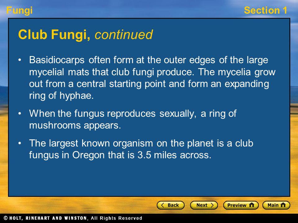 FungiSection 1 Club Fungi, continued Basidiocarps often form at the outer edges of the large mycelial mats that club fungi produce. The mycelia grow o