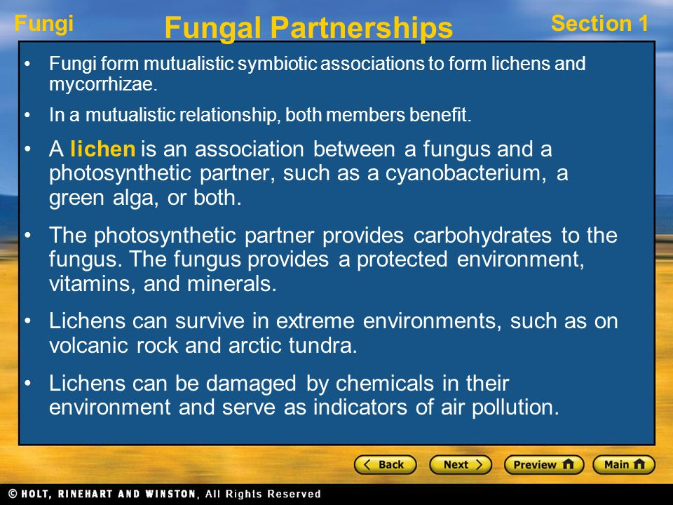 FungiSection 1 Fungal Partnerships Fungi form mutualistic symbiotic associations to form lichens and mycorrhizae. In a mutualistic relationship, both