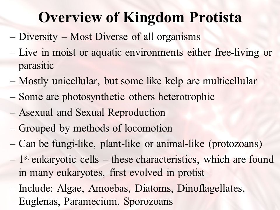 Overview of Kingdom Protista –Diversity – Most Diverse of all organisms –Live in moist or aquatic environments either free-living or parasitic –Mostly