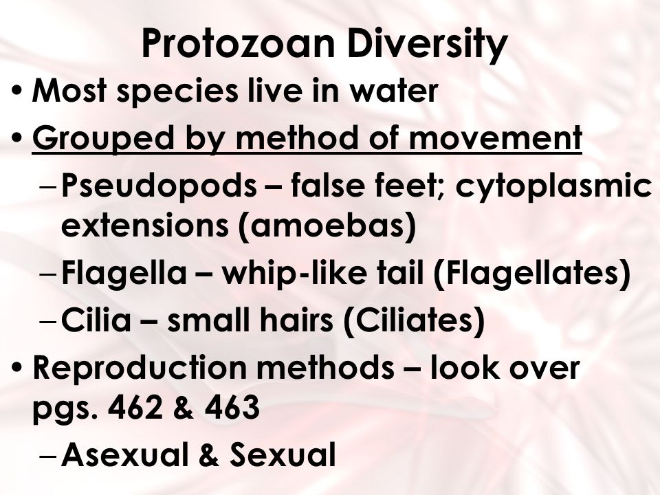 Protozoan Diversity Most species live in water Grouped by method of movement – Pseudopods – false feet; cytoplasmic extensions (amoebas) – Flagella –