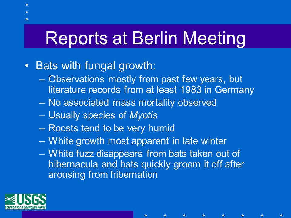 Reports at Berlin Meeting Bats with fungal growth: –Observations mostly from past few years, but literature records from at least 1983 in Germany –No associated mass mortality observed –Usually species of Myotis –Roosts tend to be very humid –White growth most apparent in late winter –White fuzz disappears from bats taken out of hibernacula and bats quickly groom it off after arousing from hibernation