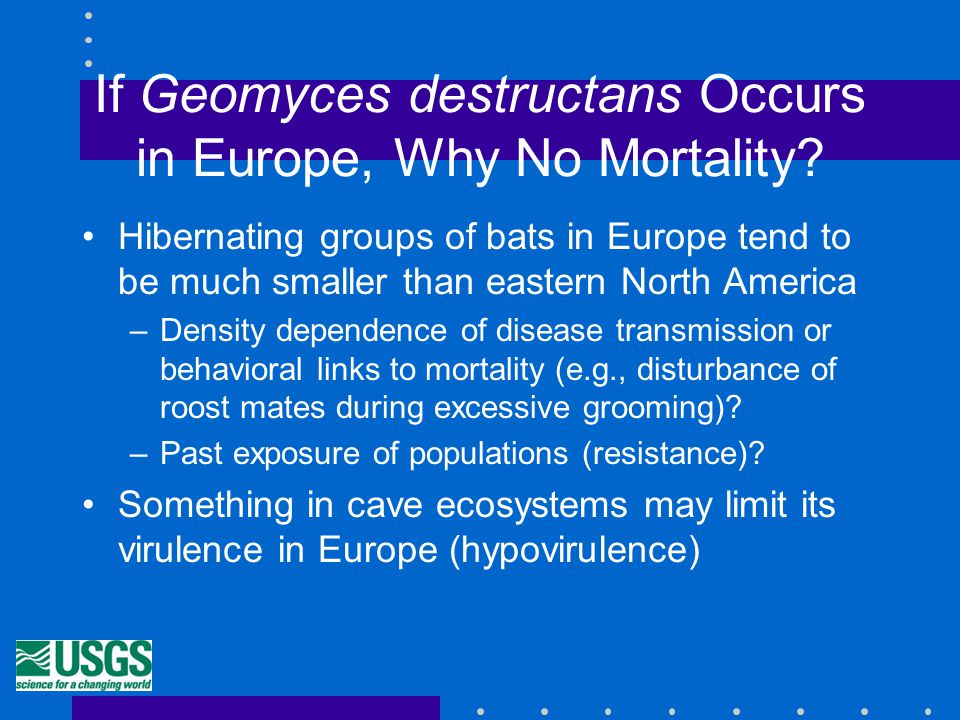 If Geomyces destructans Occurs in Europe, Why No Mortality.