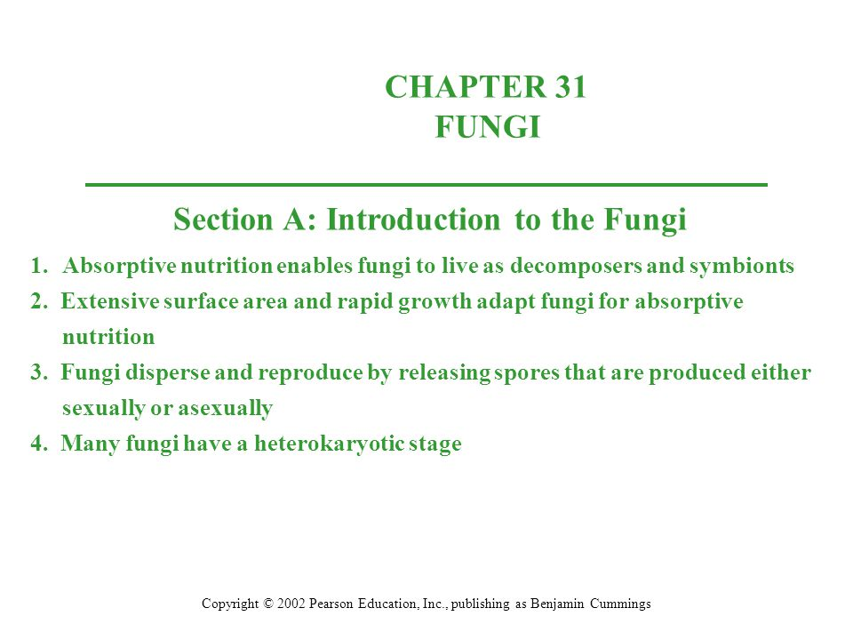 Molecular evidence supports the widely held view that the four fungal divisions are monophyletic.