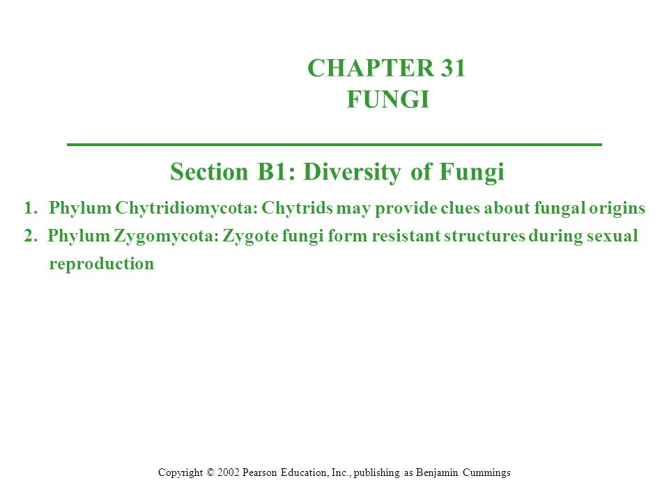 CHAPTER 31 FUNGI Copyright © 2002 Pearson Education, Inc., publishing as Benjamin Cummings Section B1: Diversity of Fungi 1.Phylum Chytridiomycota: Ch