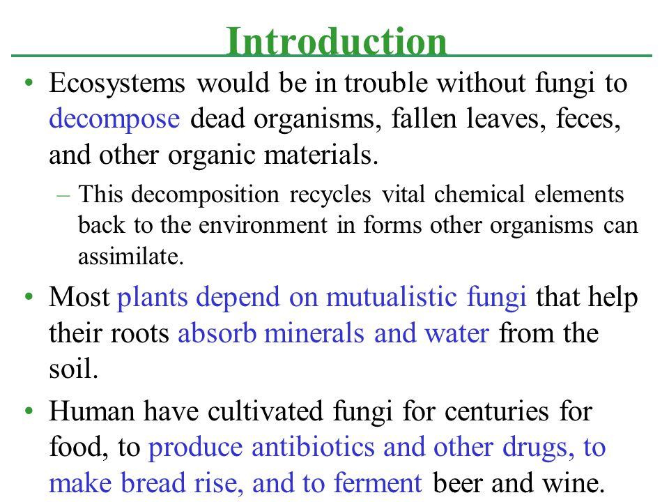 Fungi and bacteria are the principle decomposers that keep ecosystems stocked with the inorganic nutrients essential for plant growth.