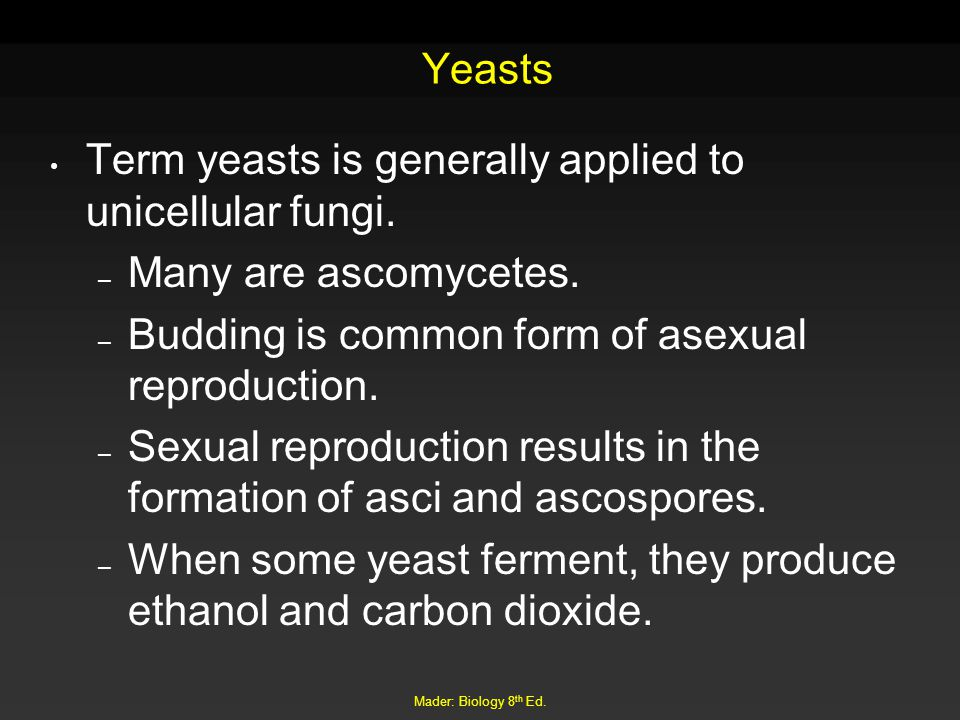 Mader: Biology 8 th Ed.Yeasts Term yeasts is generally applied to unicellular fungi.