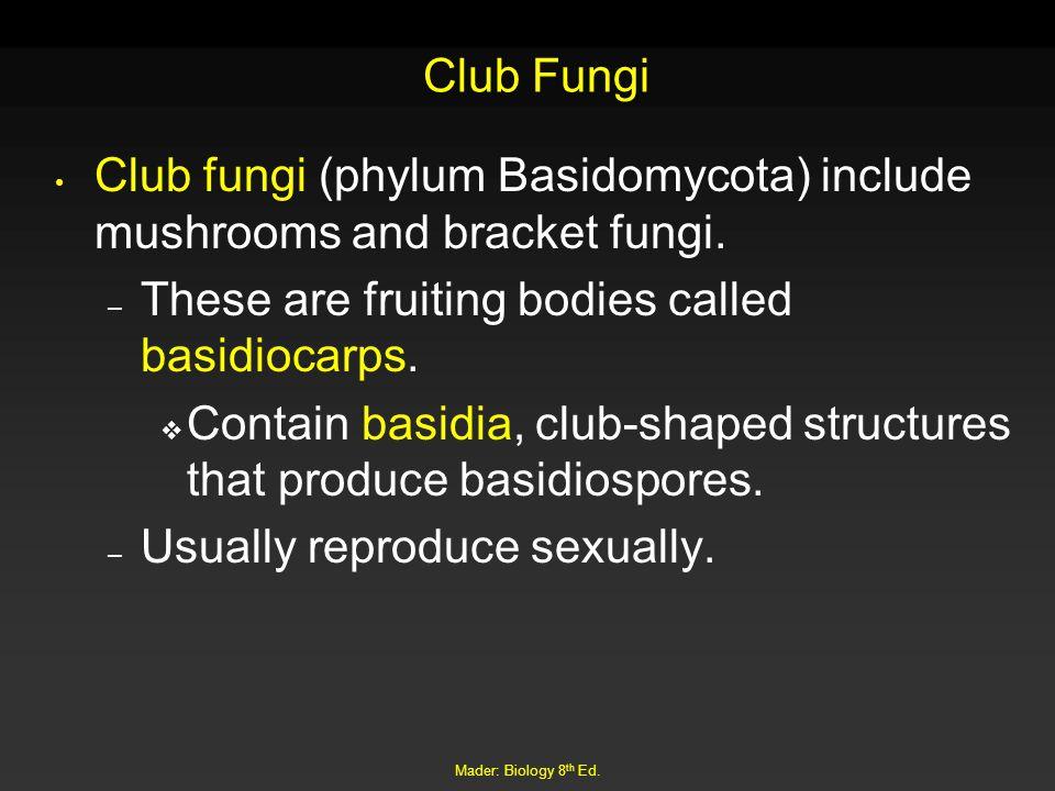 Mader: Biology 8 th Ed. Club Fungi Club fungi (phylum Basidomycota) include mushrooms and bracket fungi. – These are fruiting bodies called basidiocar