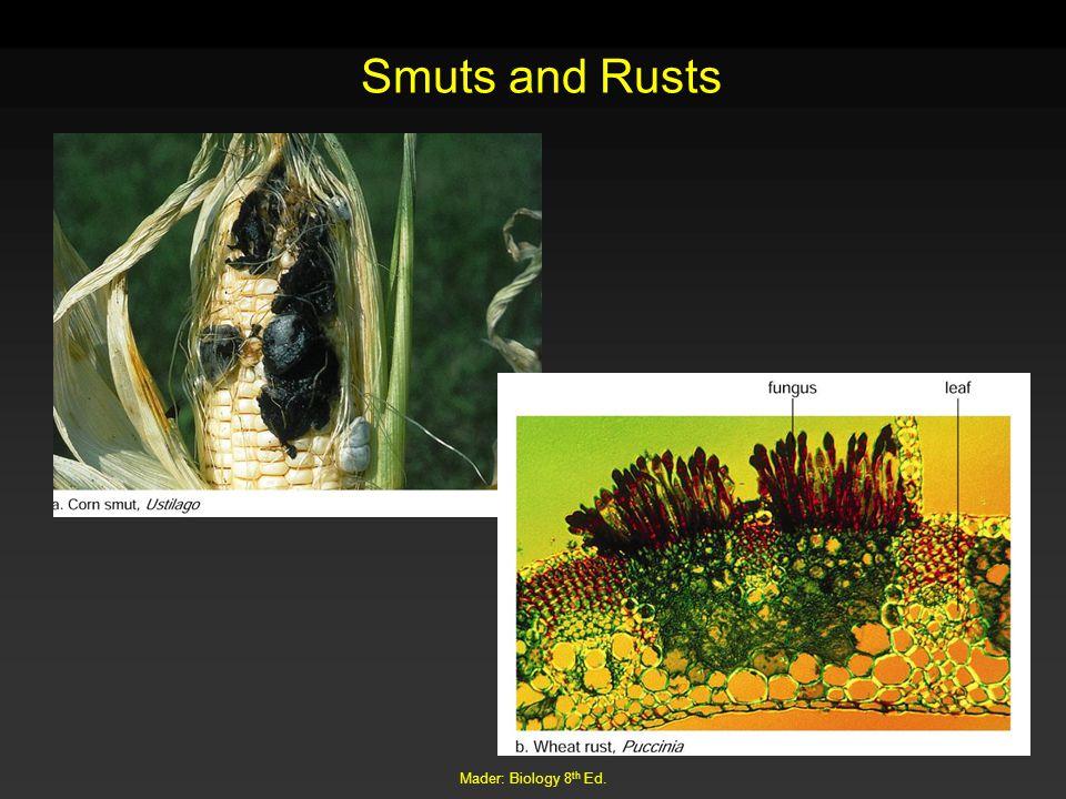 Mader: Biology 8 th Ed. Smuts and Rusts