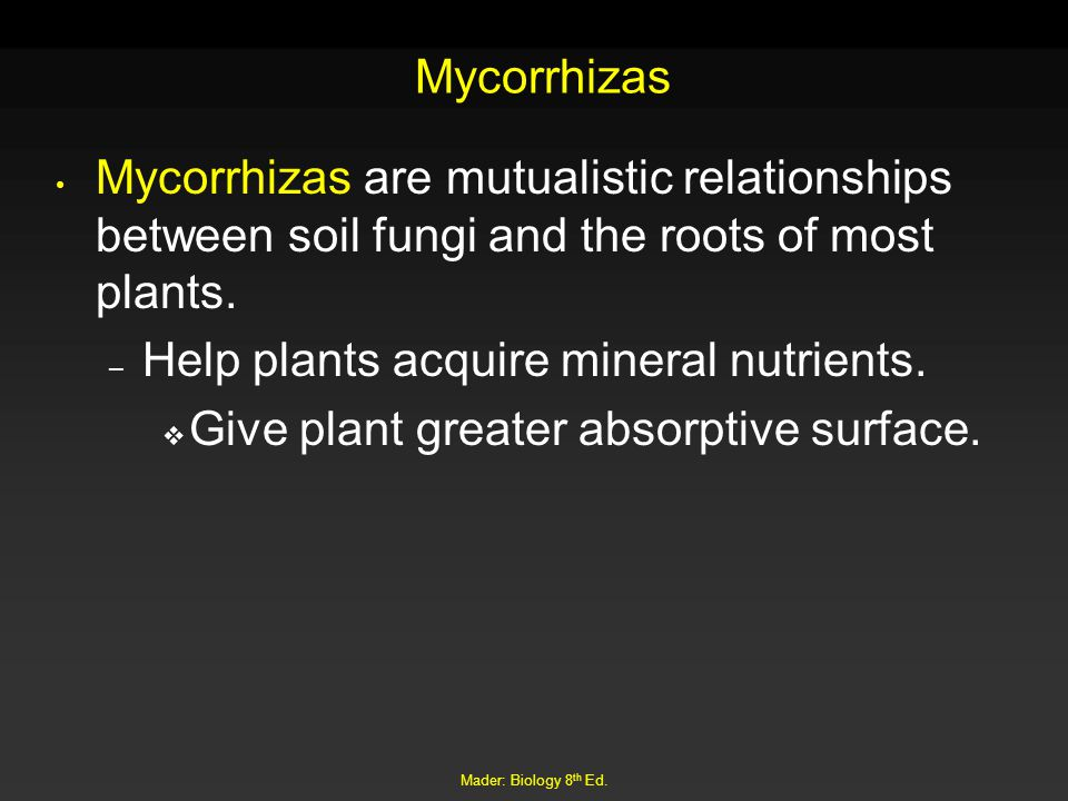 Mader: Biology 8 th Ed. Mycorrhizas Mycorrhizas are mutualistic relationships between soil fungi and the roots of most plants. – Help plants acquire m