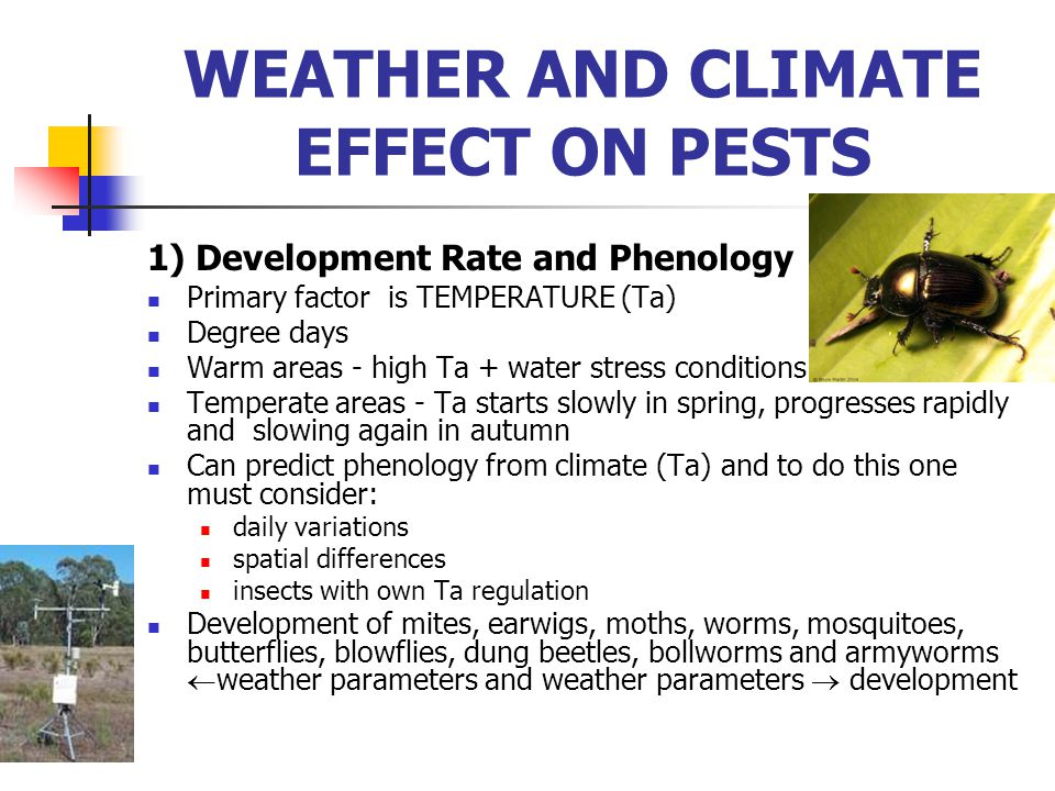 1) Development Rate and Phenology Primary factor is TEMPERATURE (Ta) Degree days Warm areas - high Ta + water stress conditions Temperate areas - Ta s