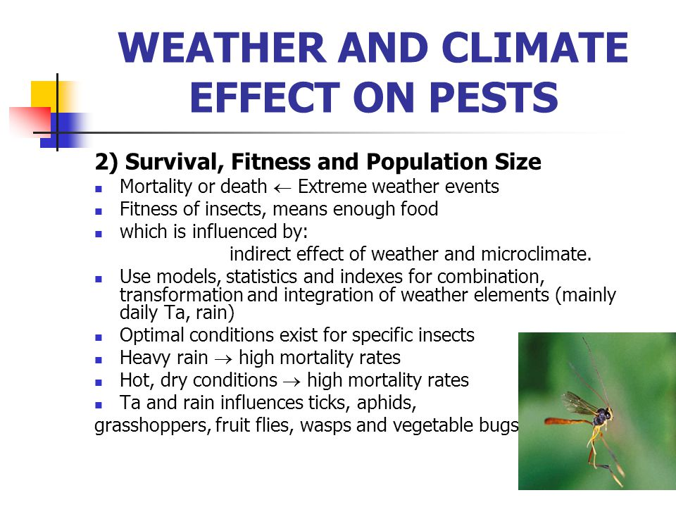 2) Survival, Fitness and Population Size Mortality or death  Extreme weather events Fitness of insects, means enough food which is influenced by: ind