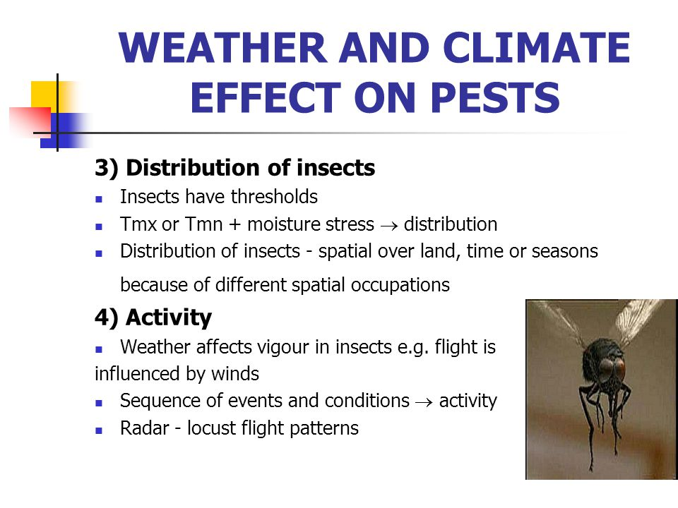 3) Distribution of insects Insects have thresholds Tmx or Tmn + moisture stress  distribution Distribution of insects - spatial over land, time or se