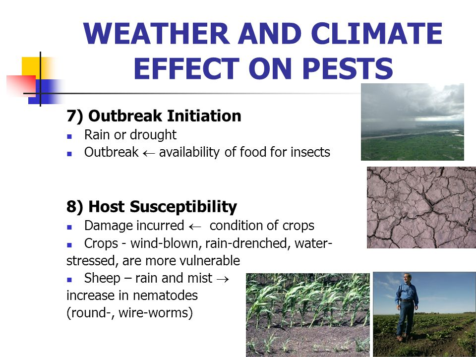 7) Outbreak Initiation Rain or drought Outbreak  availability of food for insects 8) Host Susceptibility Damage incurred  condition of crops Crops -