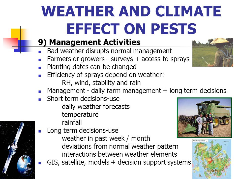9) Management Activities Bad weather disrupts normal management Farmers or growers - surveys + access to sprays Planting dates can be changed Efficien