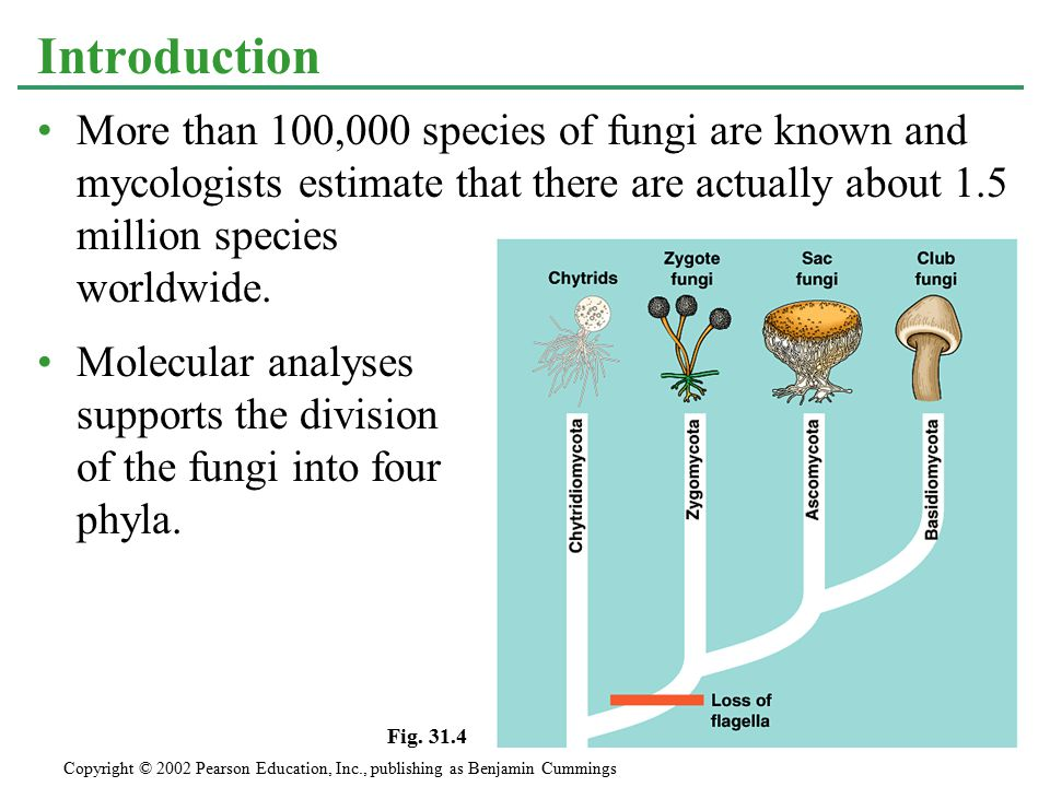 More than 100,000 species of fungi are known and mycologists estimate that there are actually about 1.5 million species worldwide. Molecular analyses