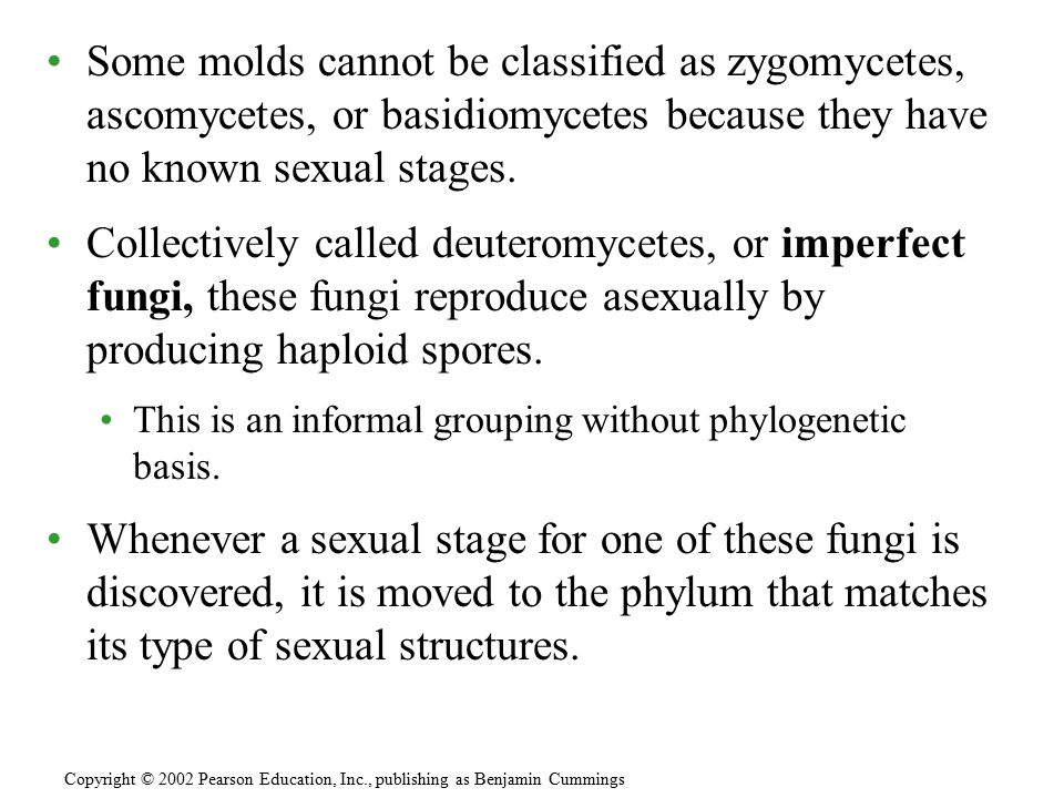 Some molds cannot be classified as zygomycetes, ascomycetes, or basidiomycetes because they have no known sexual stages. Collectively called deuteromy