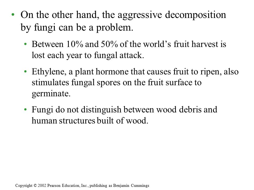On the other hand, the aggressive decomposition by fungi can be a problem. Between 10% and 50% of the world's fruit harvest is lost each year to funga