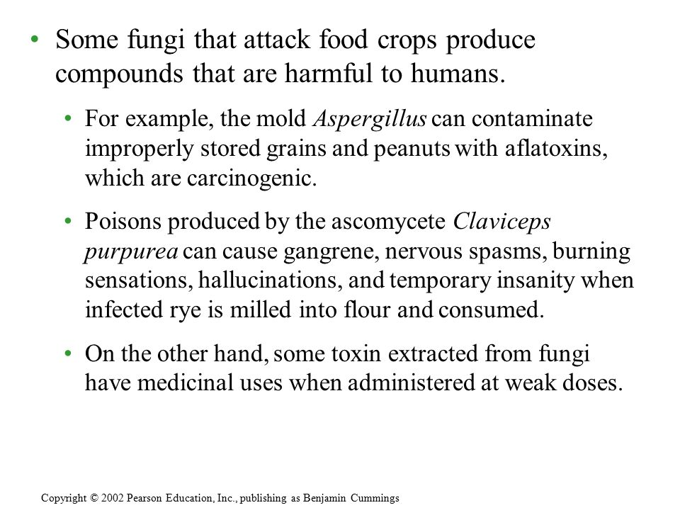 Some fungi that attack food crops produce compounds that are harmful to humans. For example, the mold Aspergillus can contaminate improperly stored gr