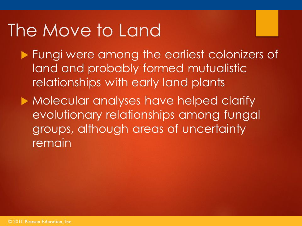 The Move to Land  Fungi were among the earliest colonizers of land and probably formed mutualistic relationships with early land plants  Molecular a