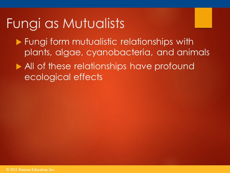 Fungi as Mutualists  Fungi form mutualistic relationships with plants, algae, cyanobacteria, and animals  All of these relationships have profound e