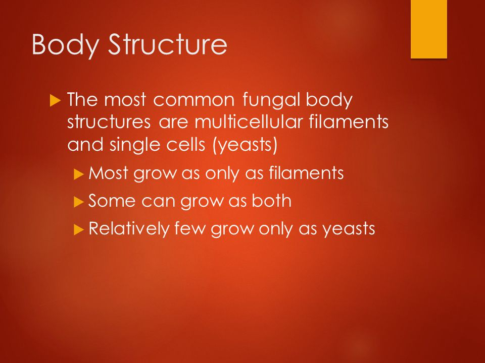 Body Structure  The bodies of fungi grow underground as a network of filaments called hyphae  Cells are tubular in shape and surrounded by walls made of chitin  Fungal hyphae form an interwoven mass called a mycelium that infiltrates the material the fungus is feeding on (usually dead)