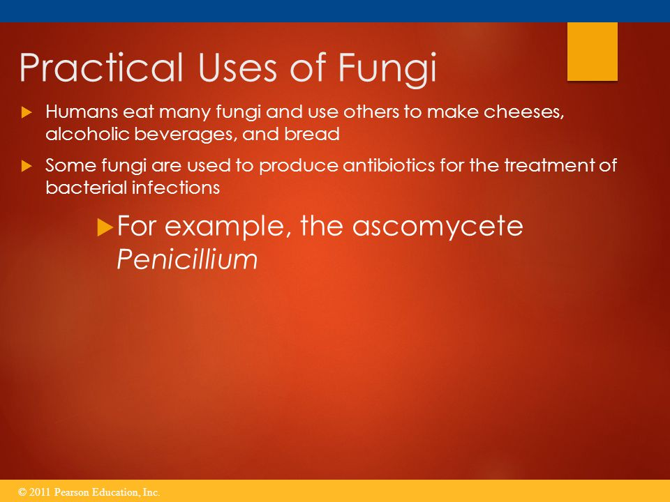 Practical Uses of Fungi  Humans eat many fungi and use others to make cheeses, alcoholic beverages, and bread  Some fungi are used to produce antibi