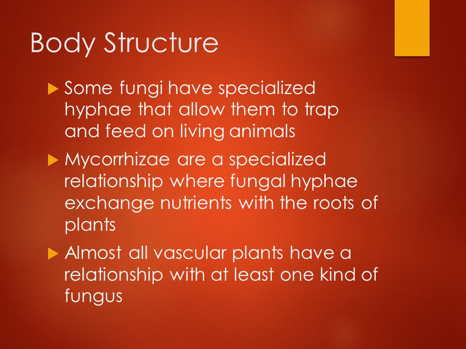 Reproduction  Fungi propagate themselves by producing vast numbers of spores, either sexually or asexually  Fungi can produce spores from different types of life cycles