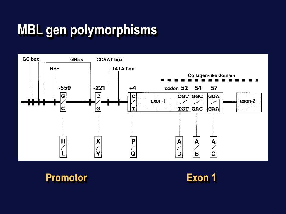 MBL gen polymorphisms PromotorPromotor Exon 1