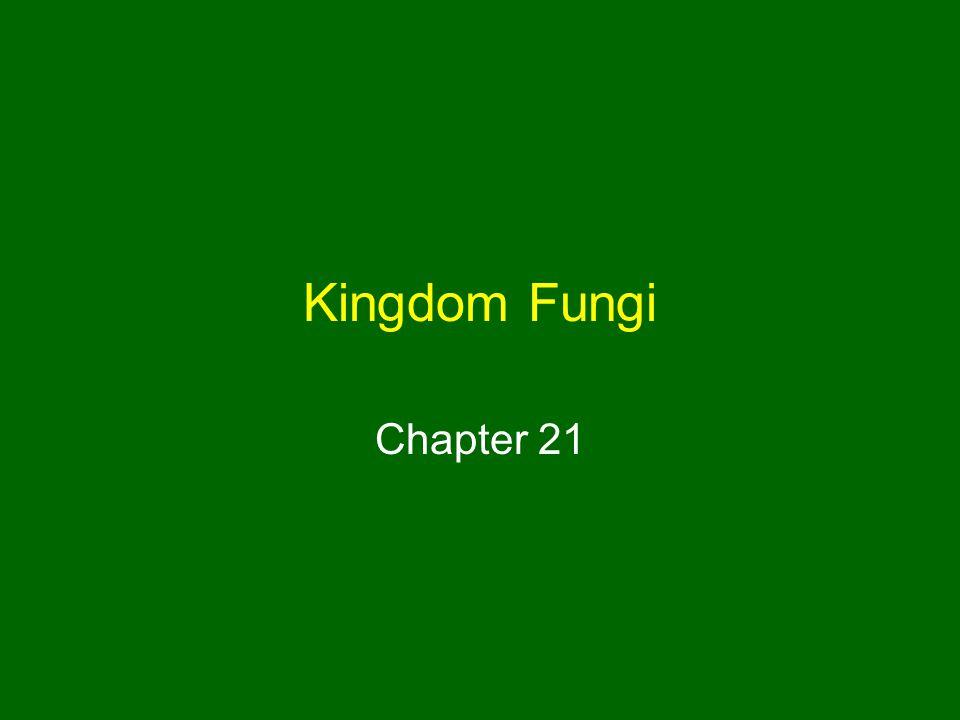 Kingdom Fungi Chapter 21