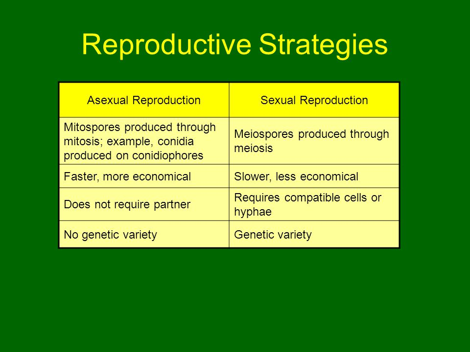 Reproductive Strategies Asexual ReproductionSexual Reproduction Mitospores produced through mitosis; example, conidia produced on conidiophores Meiospores produced through meiosis Faster, more economicalSlower, less economical Does not require partner Requires compatible cells or hyphae No genetic varietyGenetic variety