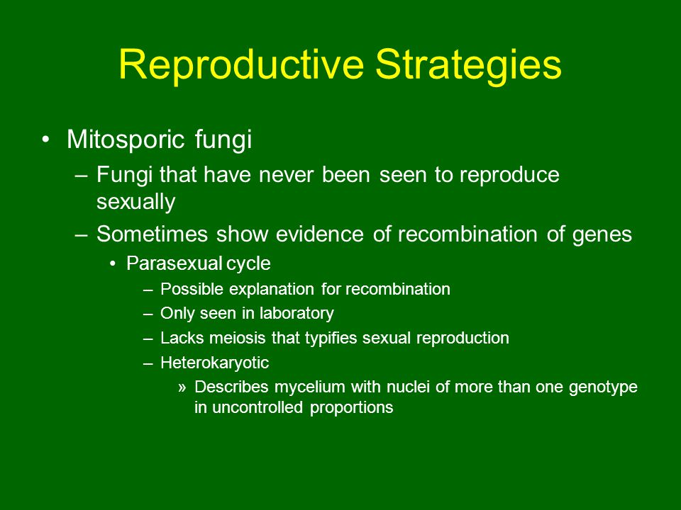 Reproductive Strategies Mitosporic fungi –Fungi that have never been seen to reproduce sexually –Sometimes show evidence of recombination of genes Parasexual cycle –Possible explanation for recombination –Only seen in laboratory –Lacks meiosis that typifies sexual reproduction –Heterokaryotic »Describes mycelium with nuclei of more than one genotype in uncontrolled proportions