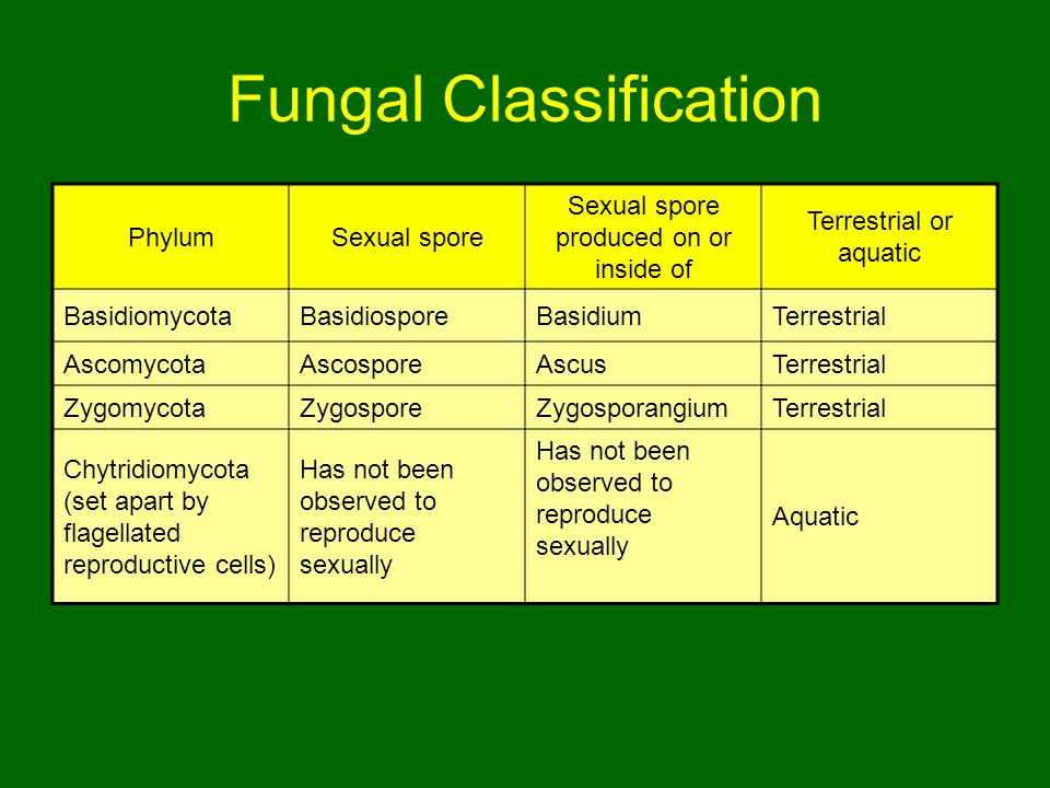 Fungal Classification PhylumSexual spore Sexual spore produced on or inside of Terrestrial or aquatic BasidiomycotaBasidiosporeBasidiumTerrestrial AscomycotaAscosporeAscusTerrestrial ZygomycotaZygosporeZygosporangiumTerrestrial Chytridiomycota (set apart by flagellated reproductive cells) Has not been observed to reproduce sexually Aquatic