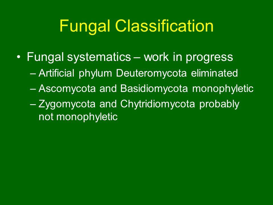 Fungal Classification Fungal systematics – work in progress –Artificial phylum Deuteromycota eliminated –Ascomycota and Basidiomycota monophyletic –Zygomycota and Chytridiomycota probably not monophyletic