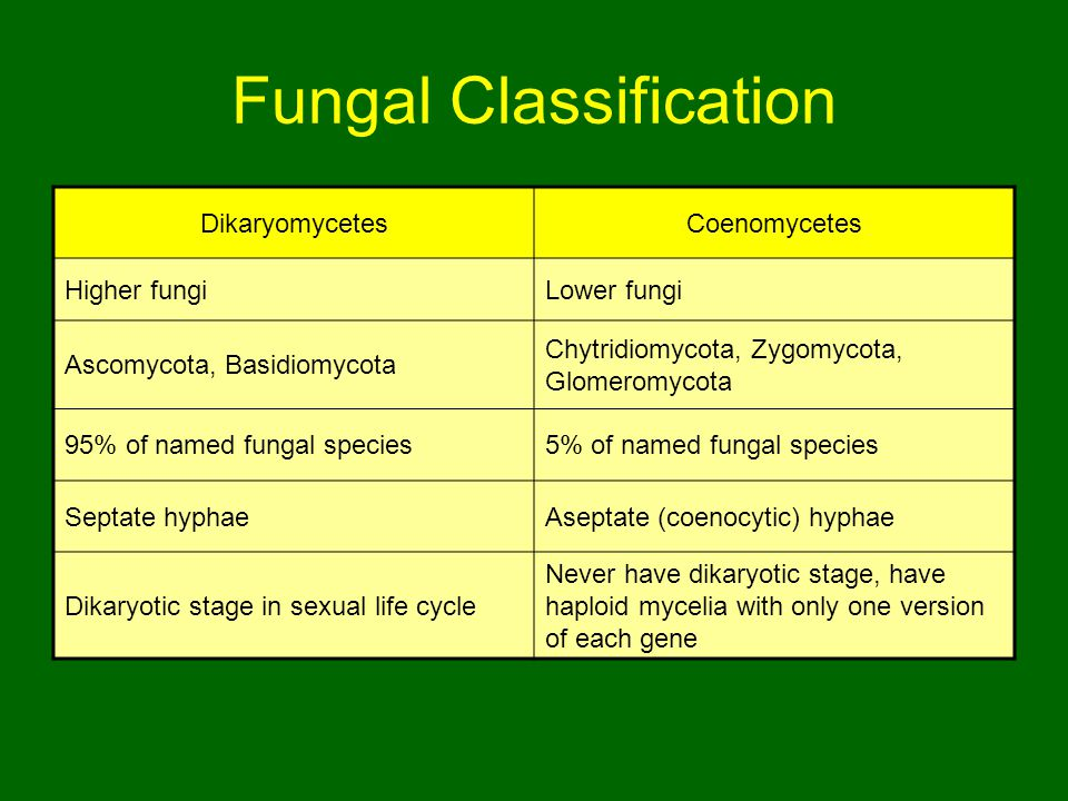 Fungal Classification DikaryomycetesCoenomycetes Higher fungiLower fungi Ascomycota, Basidiomycota Chytridiomycota, Zygomycota, Glomeromycota 95% of named fungal species5% of named fungal species Septate hyphaeAseptate (coenocytic) hyphae Dikaryotic stage in sexual life cycle Never have dikaryotic stage, have haploid mycelia with only one version of each gene