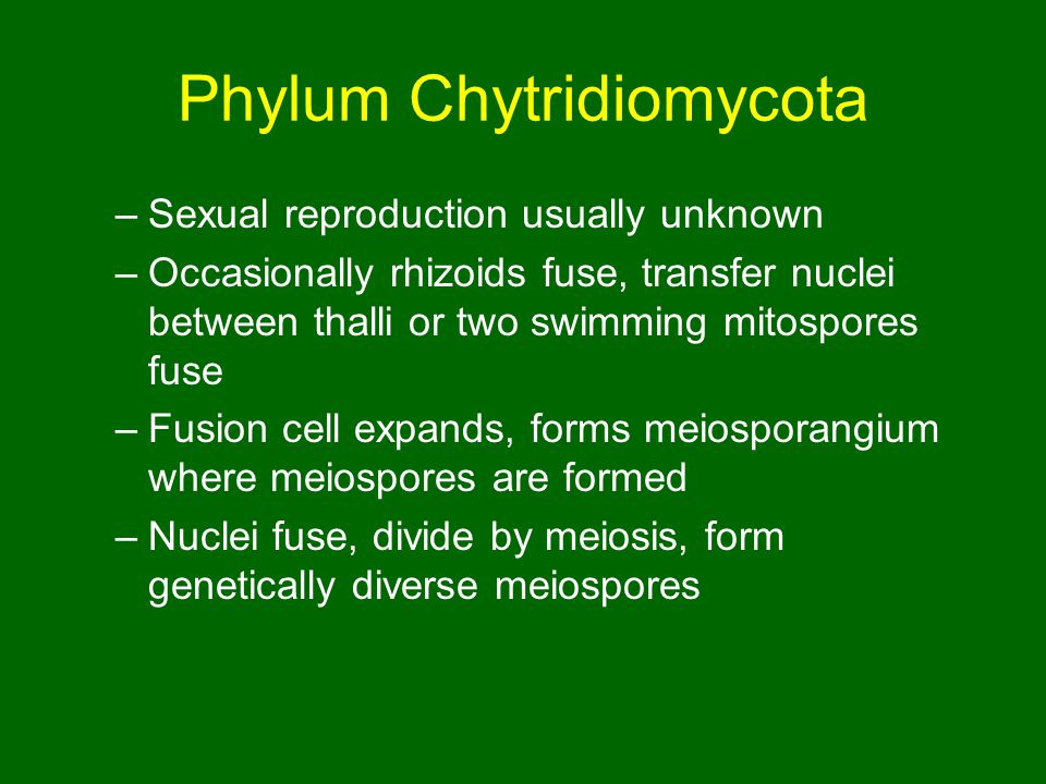 Phylum Chytridiomycota –Sexual reproduction usually unknown –Occasionally rhizoids fuse, transfer nuclei between thalli or two swimming mitospores fuse –Fusion cell expands, forms meiosporangium where meiospores are formed –Nuclei fuse, divide by meiosis, form genetically diverse meiospores