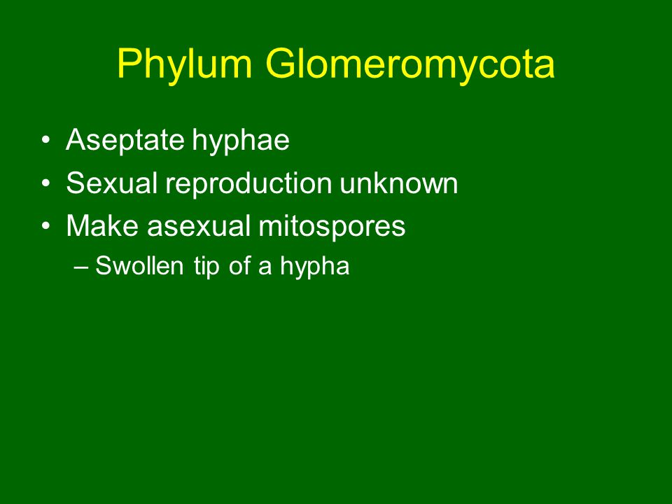 Phylum Glomeromycota Aseptate hyphae Sexual reproduction unknown Make asexual mitospores –Swollen tip of a hypha