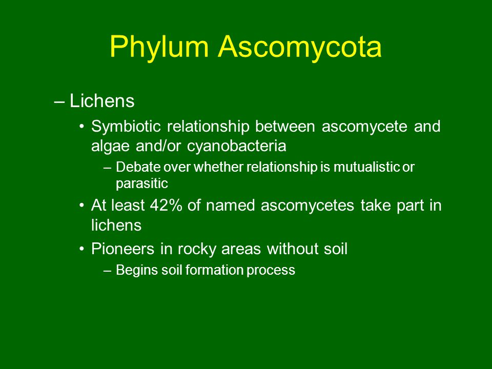 Phylum Ascomycota –Lichens Symbiotic relationship between ascomycete and algae and/or cyanobacteria –Debate over whether relationship is mutualistic or parasitic At least 42% of named ascomycetes take part in lichens Pioneers in rocky areas without soil –Begins soil formation process