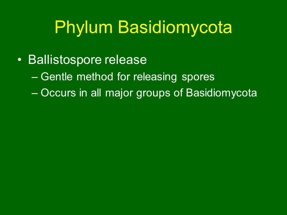 Phylum Basidiomycota Ballistospore release –Gentle method for releasing spores –Occurs in all major groups of Basidiomycota