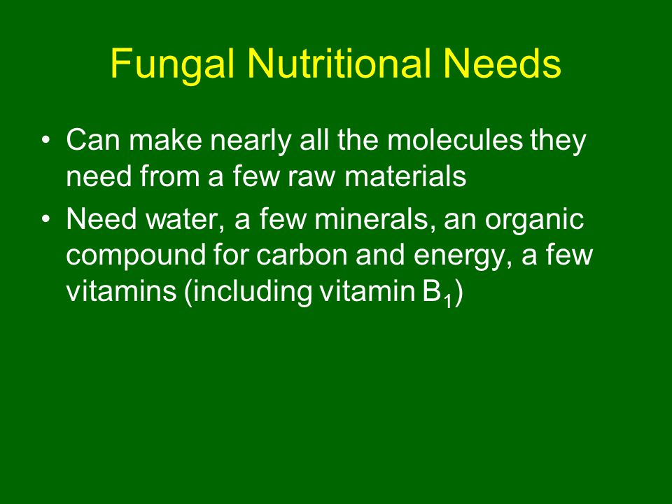 Fungal Nutritional Needs Can make nearly all the molecules they need from a few raw materials Need water, a few minerals, an organic compound for carbon and energy, a few vitamins (including vitamin B 1 )