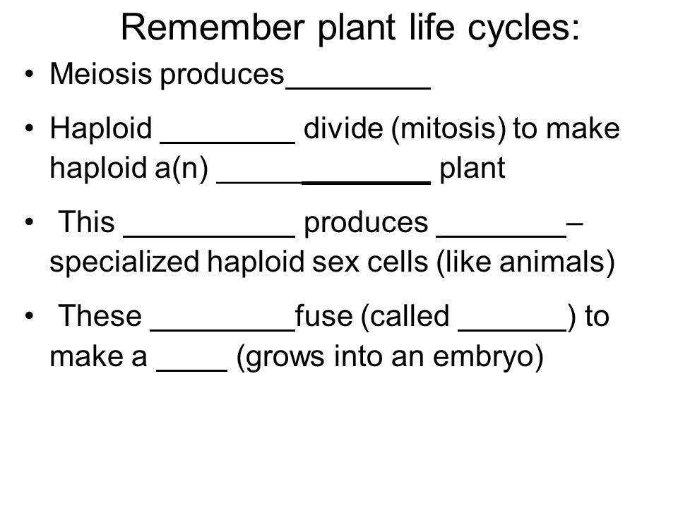 Four criteria describe the Fungi.