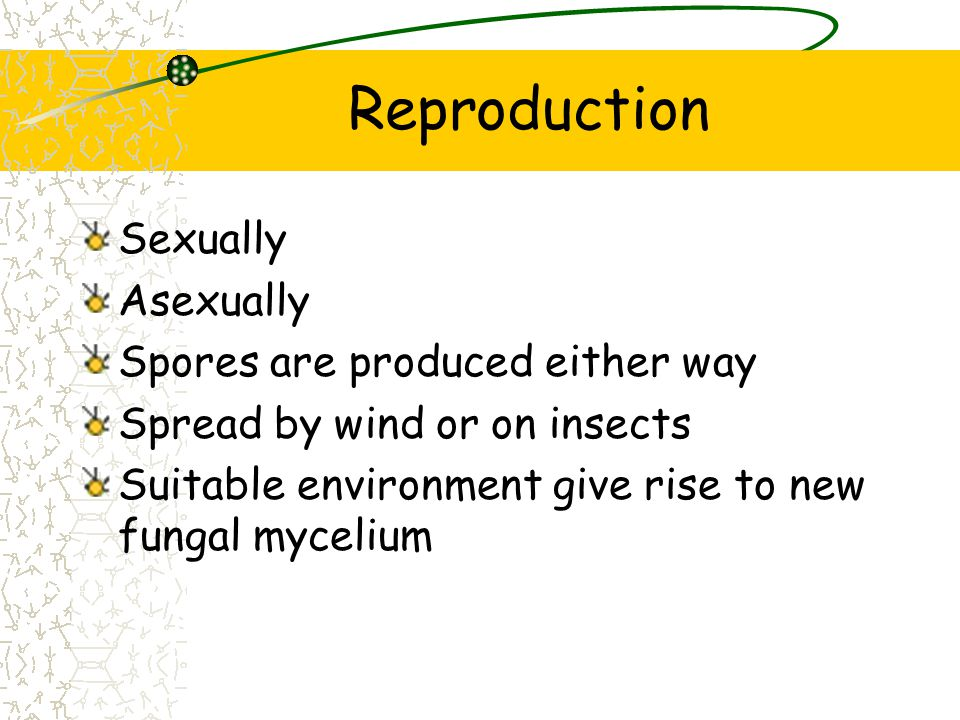 Reproduction Sexually Asexually Spores are produced either way Spread by wind or on insects Suitable environment give rise to new fungal mycelium