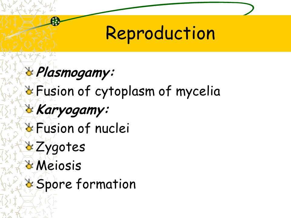 Reproduction Plasmogamy: Fusion of cytoplasm of mycelia Karyogamy: Fusion of nuclei Zygotes Meiosis Spore formation