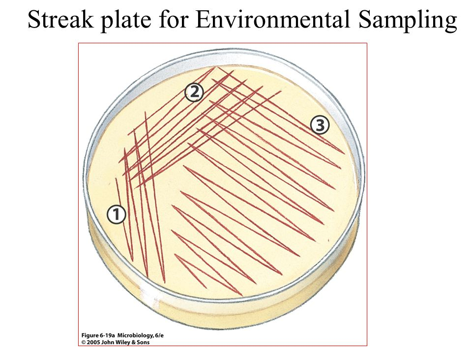 Streak plate for Environmental Sampling