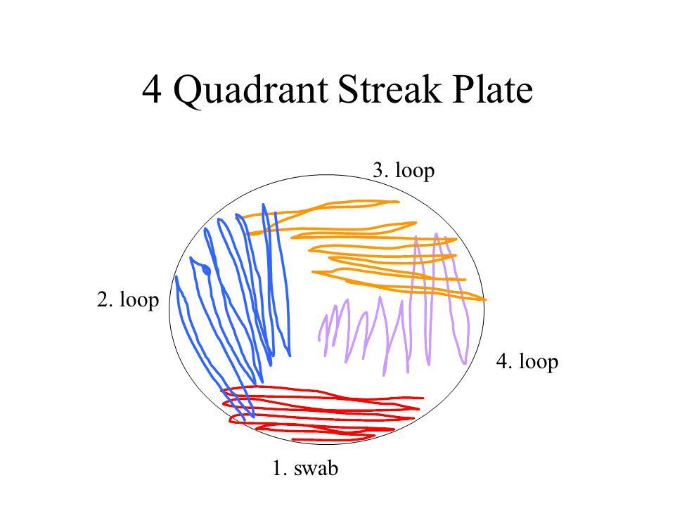 4 Quadrant Streak Plate 1. swab 2. loop 3. loop 4. loop