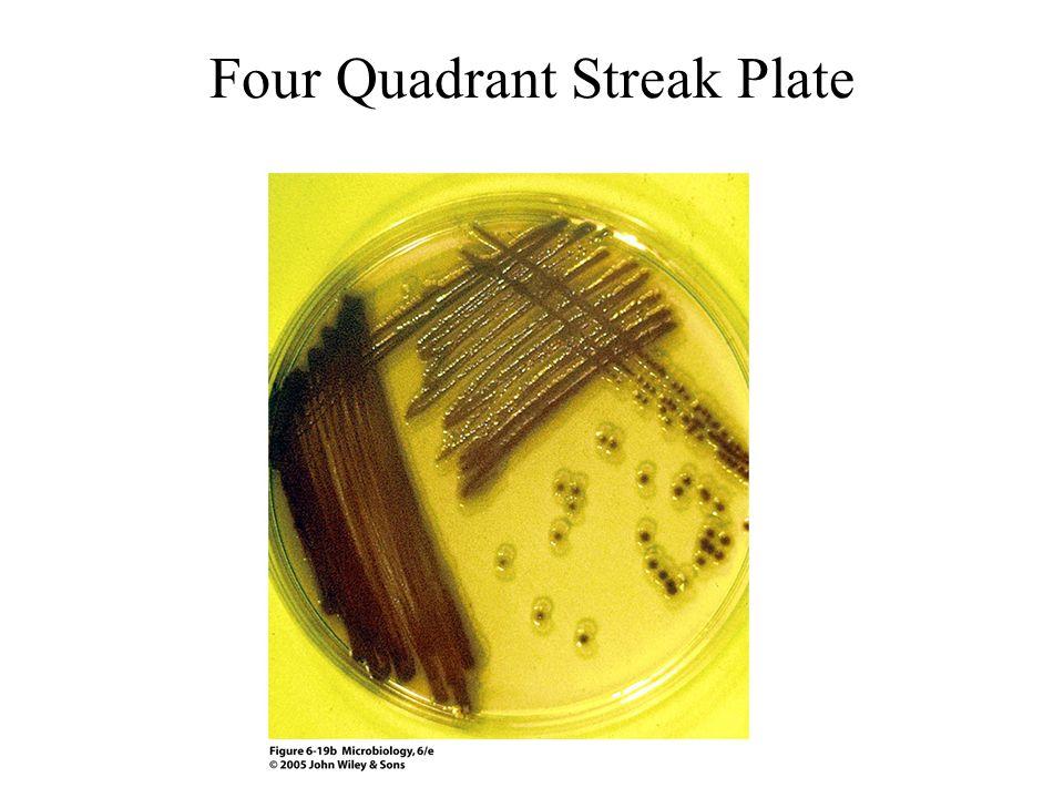 Four Quadrant Streak Plate