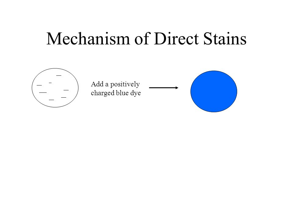 Mechanism of Direct Stains Add a positively charged blue dye